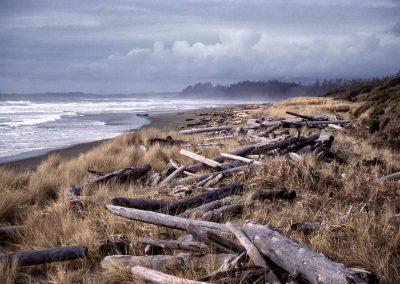 west coast beach strewn with driftwood logs