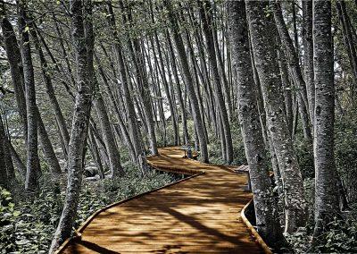 Boardwalk in the Woods