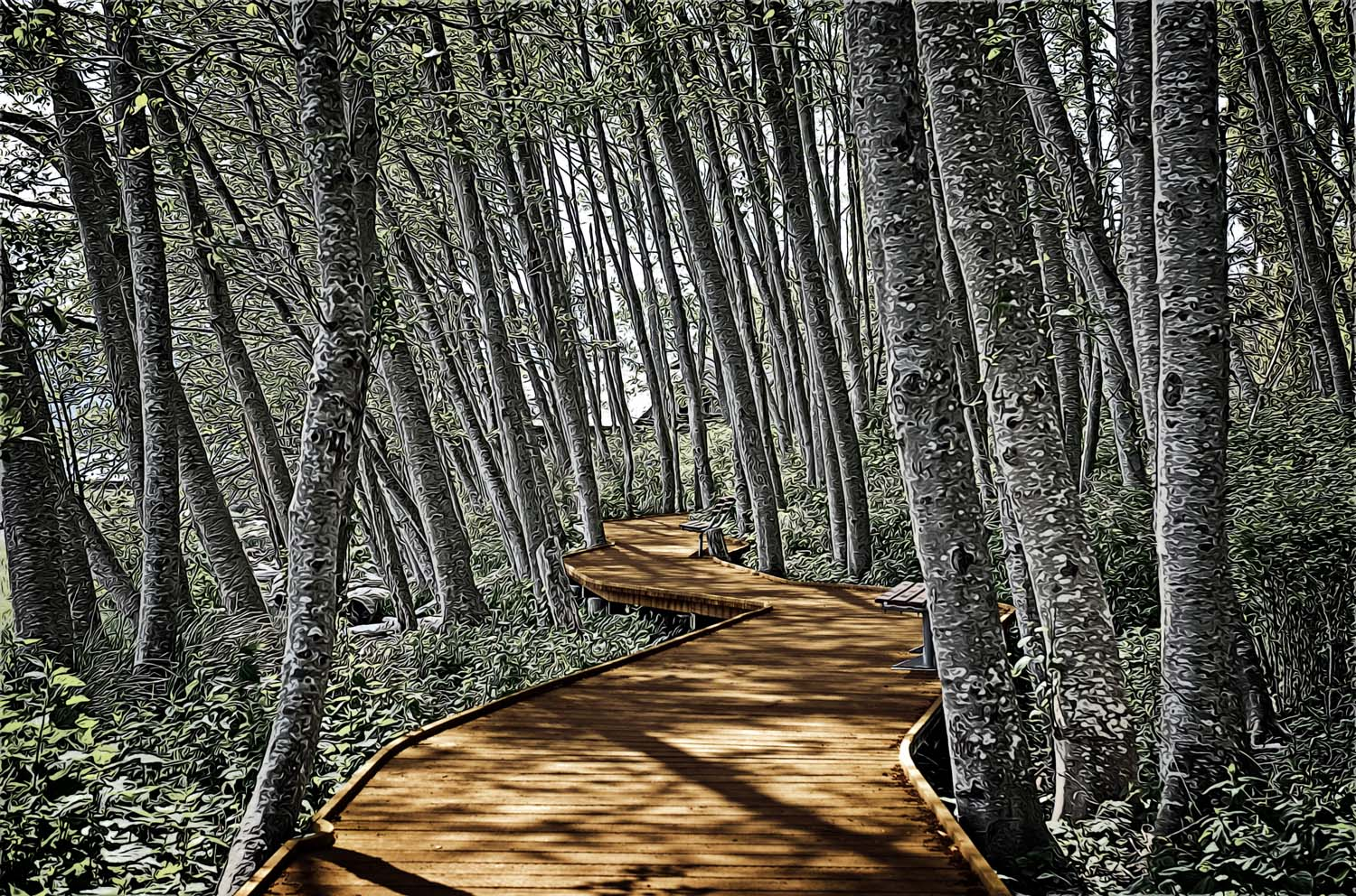 boardwalk in the woods