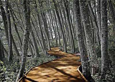 Boardwalk in the Woods - 16x24 $210
