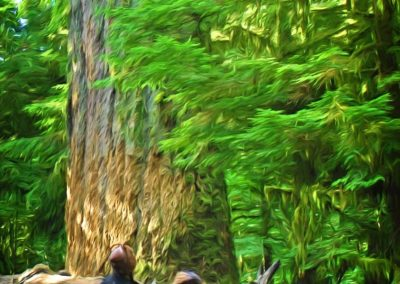 park visitors viewing tall trees