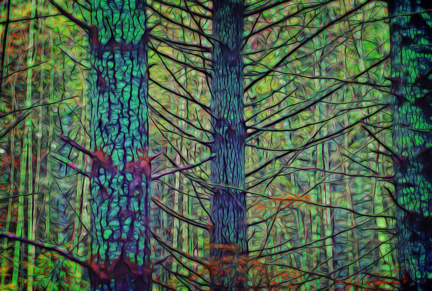 abstract forest scene
