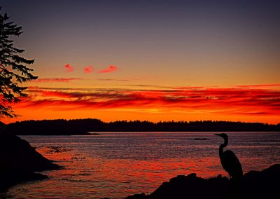 great blue heron by the ocean at sunset