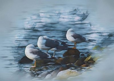 abstract of preening gulls