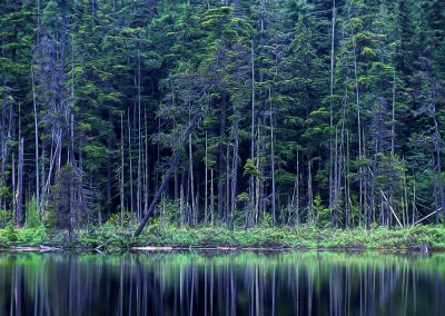 evergreen trees by a lake with reflections