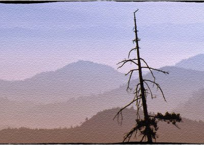 a old snag silhouetted against the mountains