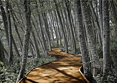 the boardwalk at MacDonald Wood Park, Comox BC, Canada