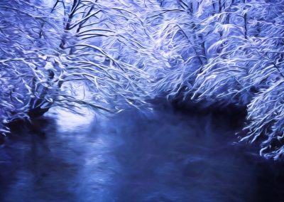 snow covered trees above river
