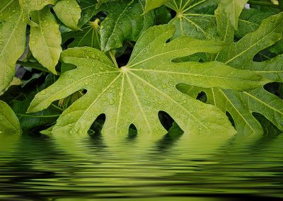 rain spotted leaves making a reflection in a stream