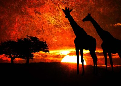 two giraffes, African sunset