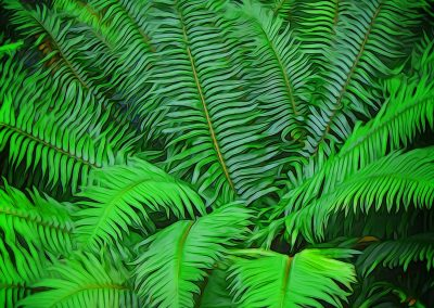 Just Ferns