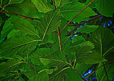 The Underside of Leaves