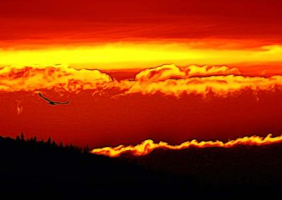 Eagle flying above mountains during spectacular sunset