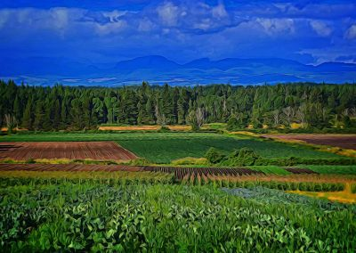 Comox valley farmland landscape