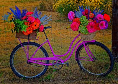 bike with carriers filled with colourful flowers