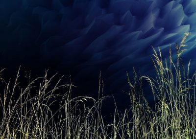 abstract image with tall grass