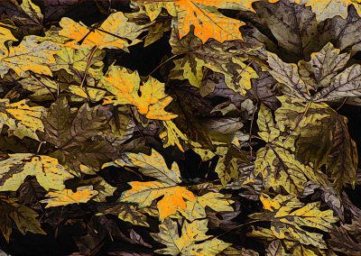 a colourful image of fallen maple leaves